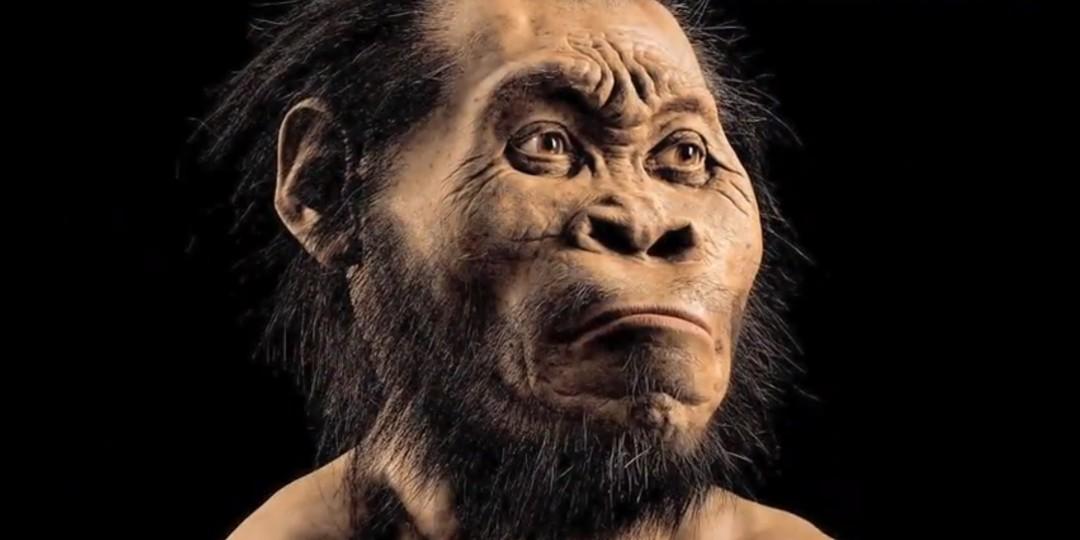 El complicado árbol genealógico de la evolución humana