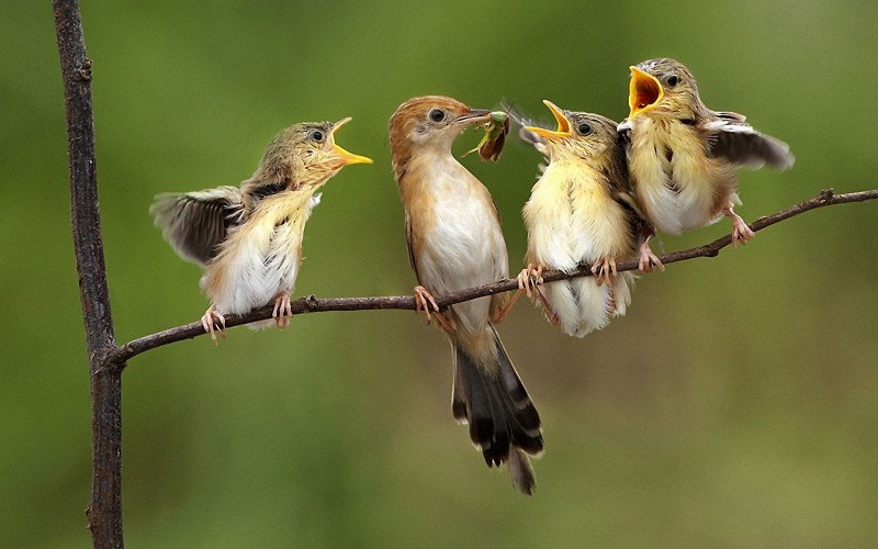 Aves pueden consumir 500 millones de toneladas de insectos al año